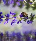 走的黄蜂 免版税库存照片