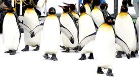 走的Penquin游行动物在雪冬天 库存照片