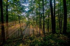 走路在阿巴拉契亚足迹的太阳 图库摄影
