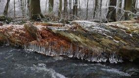 走路的冰柱 在冬天小河上的冻结的下落创造了美好的冰柱 在泡沫似的冬天溪上的闪烁的冰 划分为的结构树 影视素材