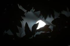 走路通过树的月亮 免版税库存照片