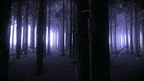 走通过一个被迷惑的森林在夜录影 影视素材