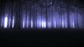 走通过一个被迷惑的森林英尺长度 股票视频