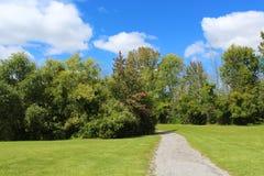 走通过夏天太阳的公园落后 免版税库存图片