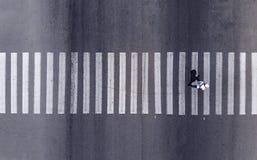 ?? 走通过斑马行人穿越道的一个步行者 r 免版税库存照片