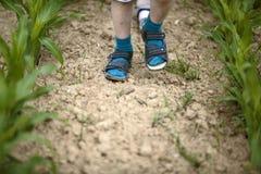 走通过新近地发芽的玉米的孩子 库存照片