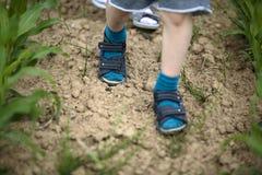 走通过新近地发芽的玉米的孩子 免版税库存图片