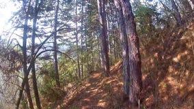 走通过树在森林里 股票视频