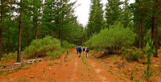 走通过森林的远足者 图库摄影