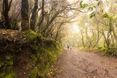 走通过森林的远足者 免版税库存图片