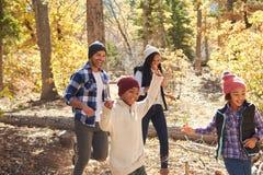 走通过秋天森林地的非裔美国人的家庭 库存图片
