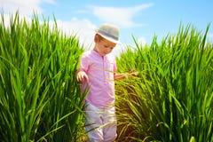 走通过米领域的逗人喜爱的小男孩 免版税库存照片