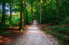 走通过阿纳姆森林  免版税库存图片