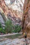 走通过水的远足者在宰恩国家公园 免版税库存照片