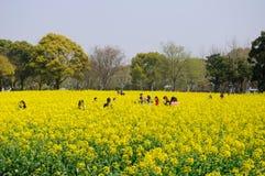 走通过黄色花的领域的中国人民 库存照片