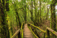 走道到森林里 库存图片
