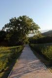 走道和偏僻的树 库存照片