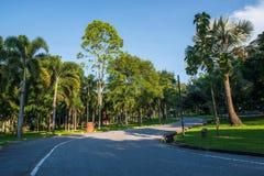 走道和椰子树在庭院里 库存照片