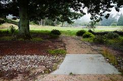 走道在一个茂盛的牧场的大树下 库存图片