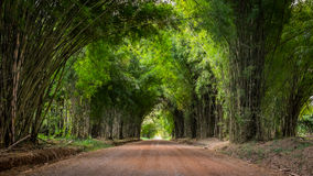 走道在与一个竹森林的双方侧了 图库摄影