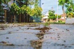 走道在公园 免版税库存照片