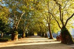 走道在夏天城市公园 免版税库存照片