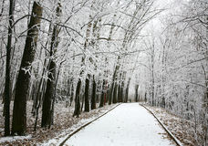走道在多雪的城市公园 库存图片