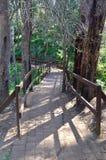 走道在森林 图库摄影