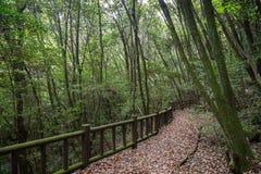 走道在济州海岛上的一个豪华和嫩绿的森林里 库存图片