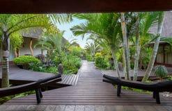 走道在热带庭院里 免版税库存照片