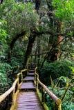 走道在生苔森林,泰国里 库存图片