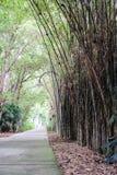 走道在竹庭院里 库存照片