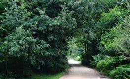 走道有绿色树的车道道路在森林公路在公园 偏僻的方式通过春天森林 图库摄影