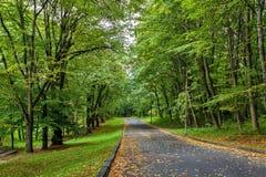 走道有绿色树的车道道路在森林美丽的胡同在公园 路方式通过黑暗的森林 免版税库存照片