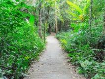 走道有绿色树的车道道路在森林美丽的胡同,路在公园在泰国 免版税库存照片
