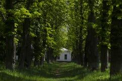 走道有绿色树的车道道路在森林美丽的胡同在公园 路方式通过黑暗的森林 库存照片