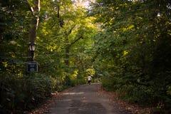 走道路通过树在中央公园,纽约 免版税库存图片