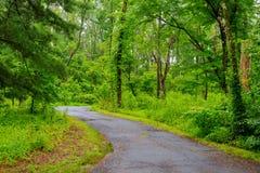 走道路S形曲线在有轻的火光的公园 免版税库存照片