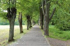走道通过夏天森林 免版税库存照片