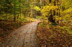 走道通过森林在秋天 库存图片