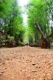 走道击碎了与竹洞的石头在全国种族古芝 免版税图库摄影