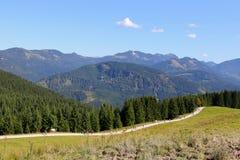 走从山的人们和母牛朝向下来对谷在期间牛驾驶 免版税图库摄影