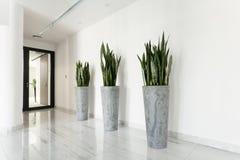 走廊的秀丽植物 图库摄影