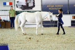 赶走霍尔国际骑马陈列在展示期间 一件深蓝礼服和一个白马的妇女骑师 莫斯科 免版税库存照片