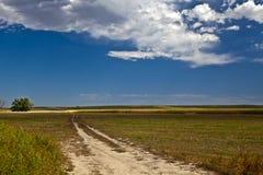 起斑纹的牧场地阳光下 图库摄影