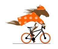 起斑纹的马骑术自行车。 库存图片