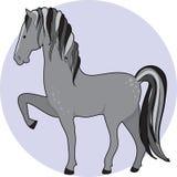 起斑纹马 免版税库存图片
