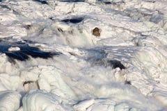 起泡沫的结冰的瀑布 库存照片