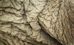 起皱纹的大象s皮肤 免版税库存图片