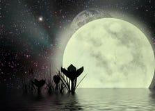 超现实番红花的moonscape 免版税库存照片